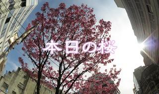 sakura20160331_eye