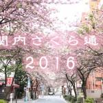 sakura0420_eye