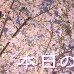 sakura20160403_eye
