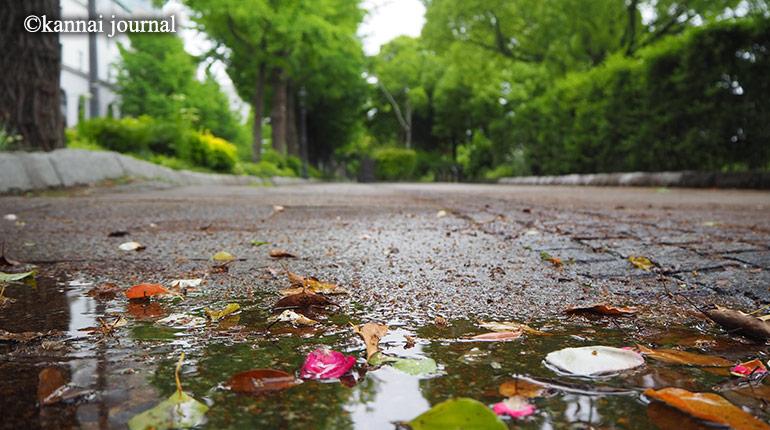 気象予報士のハマ歩き。関東で梅雨入り。雨の日の過ごし方。
